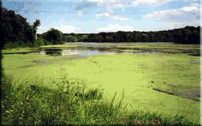 Eutrophication - area overfull of fertilizers